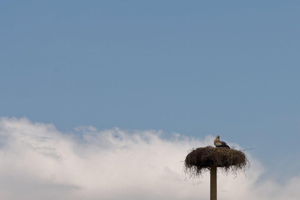 Der Storch in Wegezin