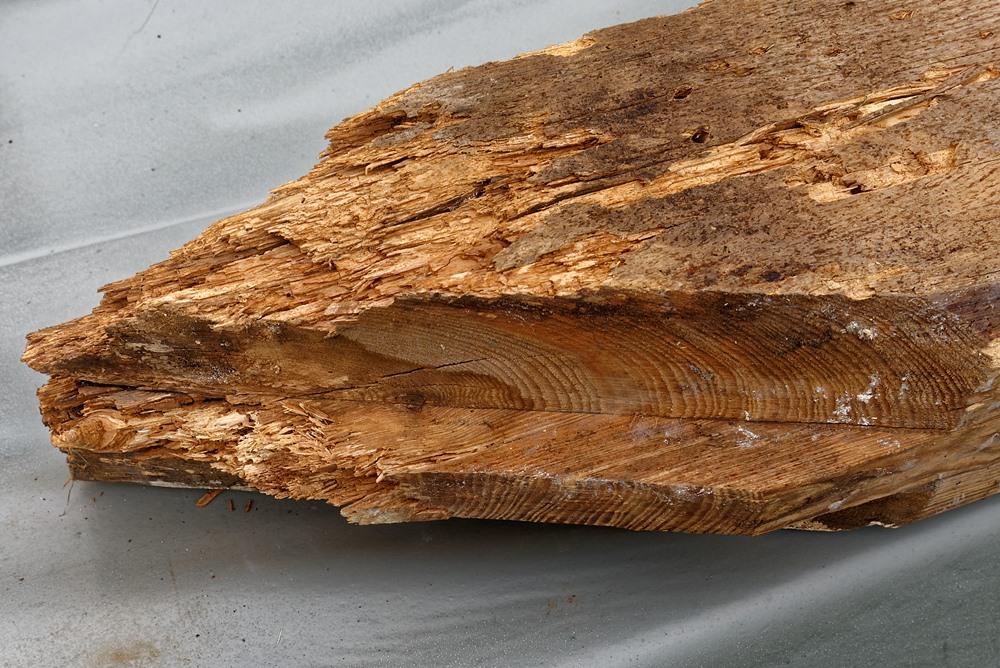 Holzwurm und Co