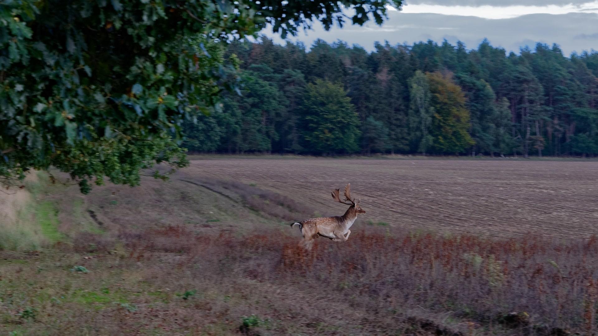 Wild in der Natur Vorpommerns