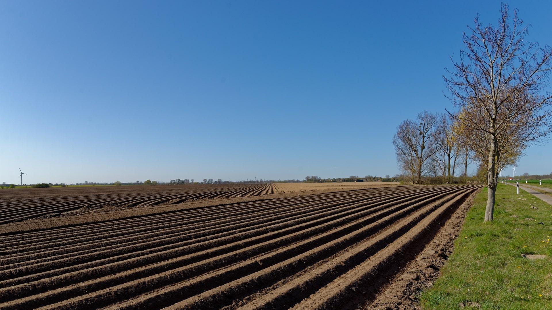 Kartoffelanbau in Wegezin