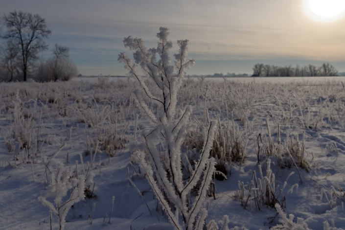 Winterblume & Diamanten 12