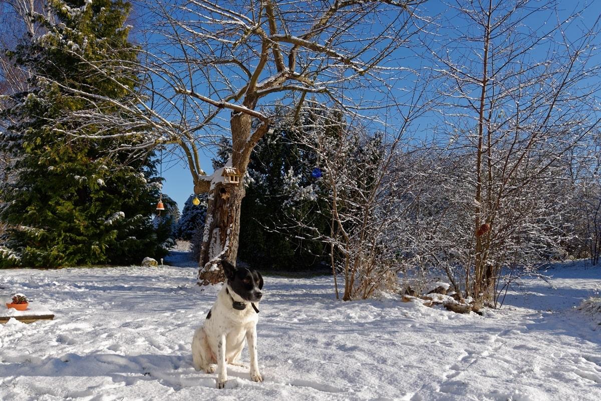 Rudi im Wintermodus