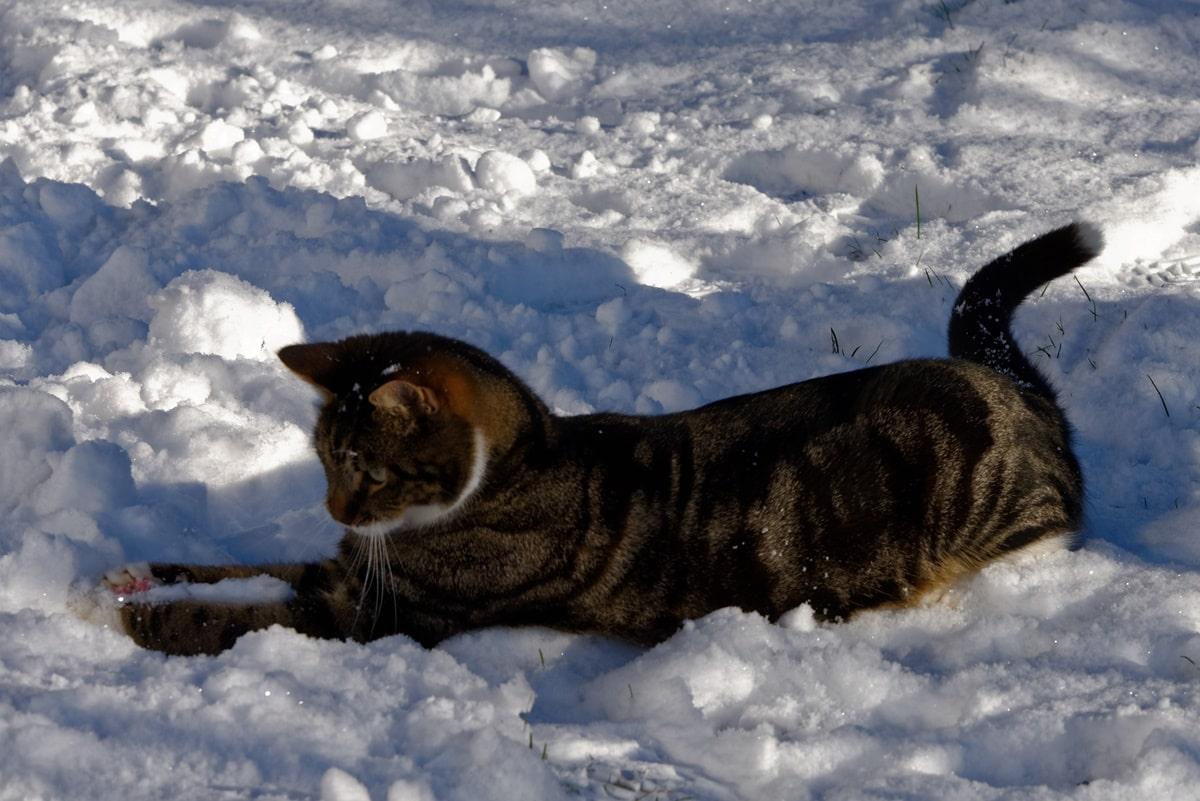 Schneebälle formen