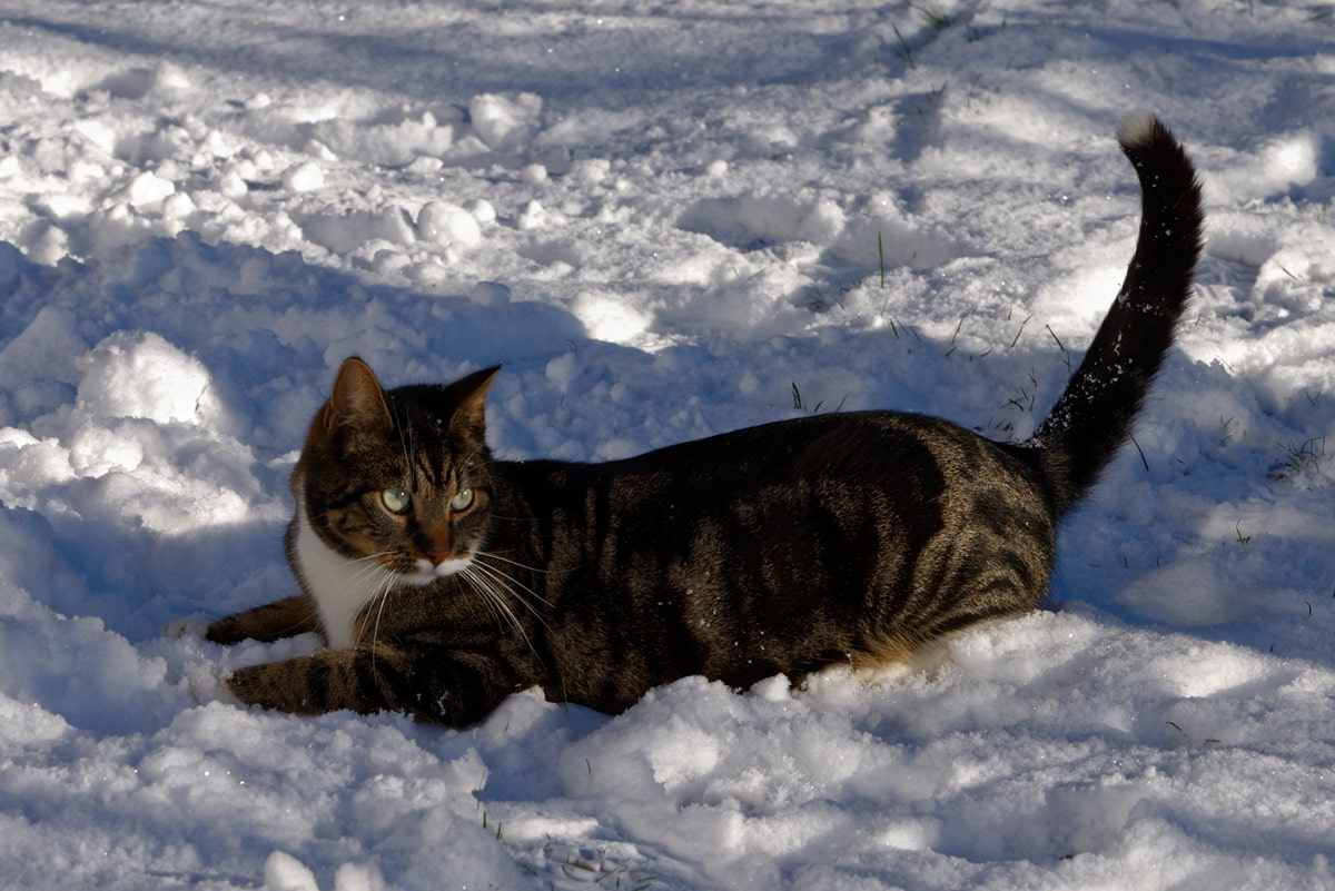 Im Schnee kann man schön spielen