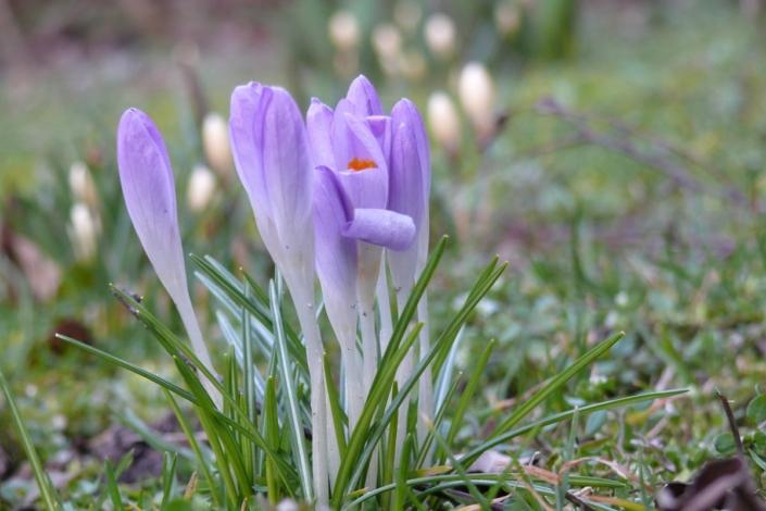Zartes Frühlingserwachen 35