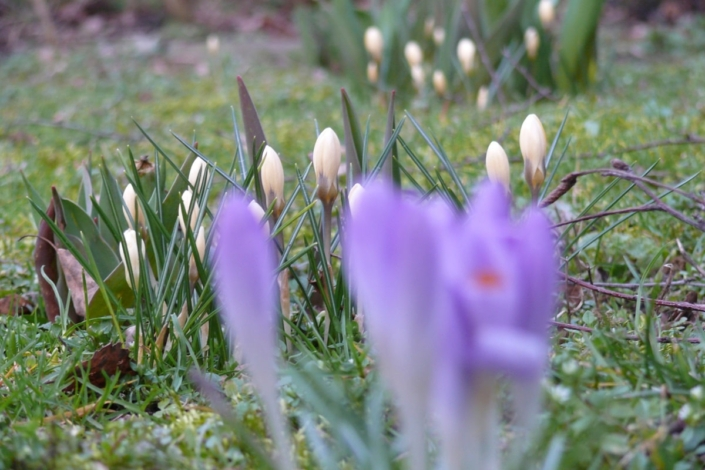 Zartes Frühlingserwachen 36