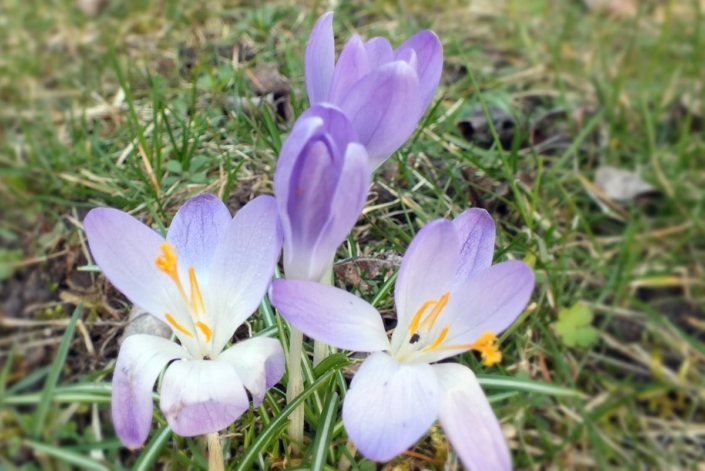 Frühlingsboten 40