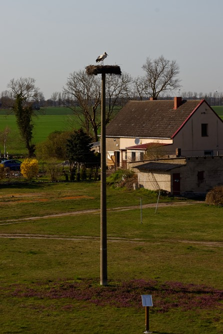Die Wegeziner Storchentafel
