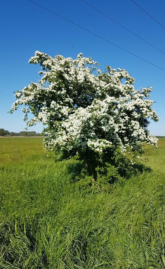 Blütenbaum 74