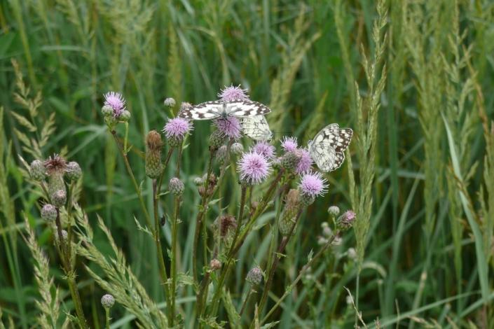 Schmetterlinge 84