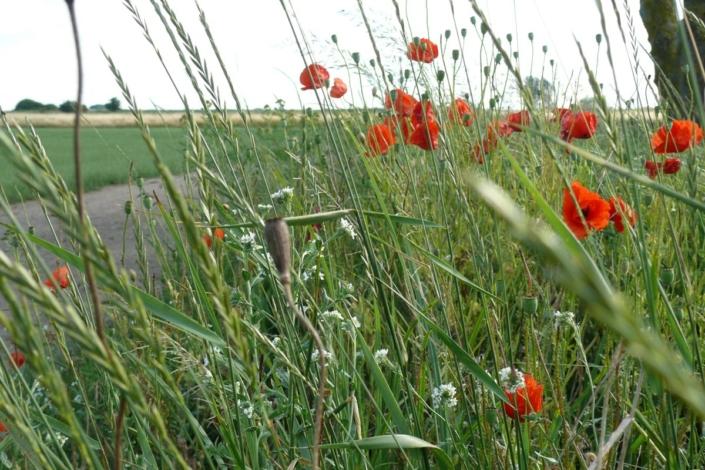 Blühende Landschaft 85