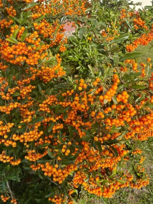 Orange ist in Mode 123