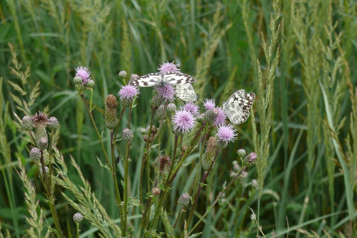 Schmetterlinge 132